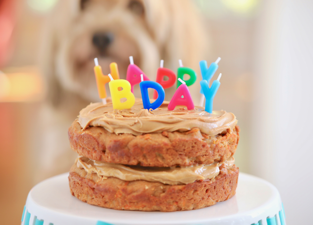 Terrific Dog Birthday Cake Recipe For Your Furry Friend Bigger Bolder Baking Funny Birthday Cards Online Fluifree Goldxyz